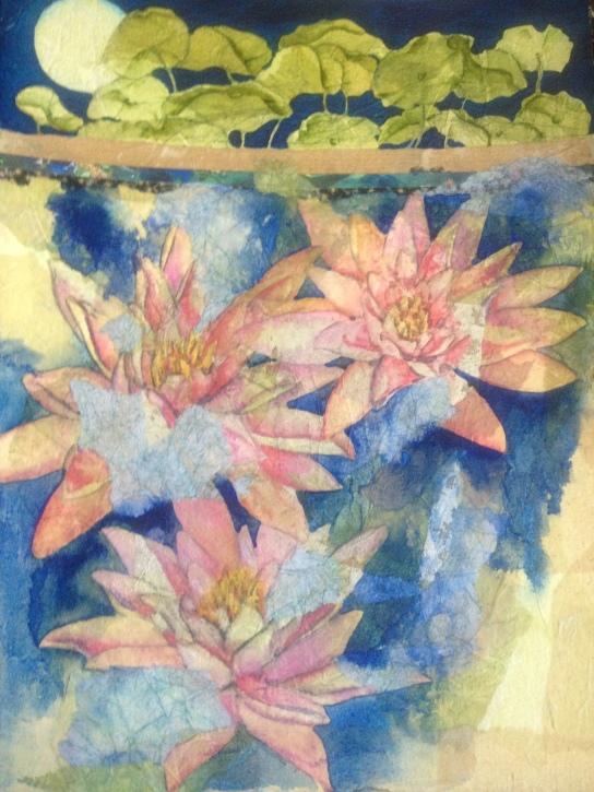 Nymphaea Colorado