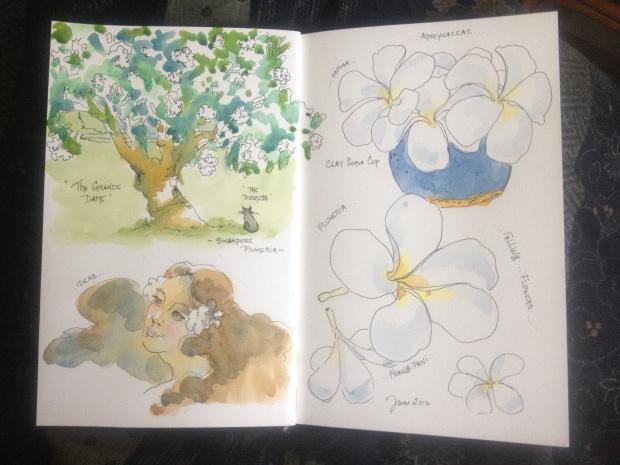 Plumeria Sketching